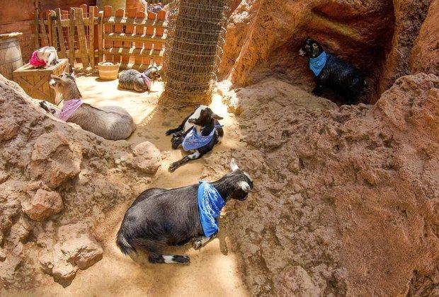 goats-disneyland-fisheye-buttes