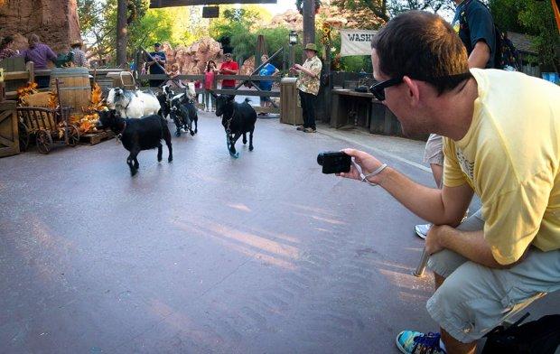 guy-selga-running-goats-disneyland