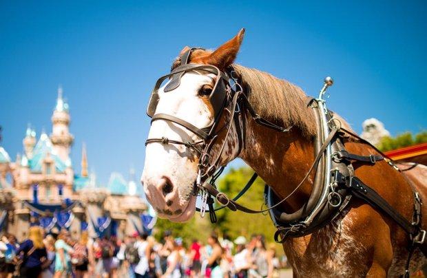 sigma-35-disneyland-horse-spring