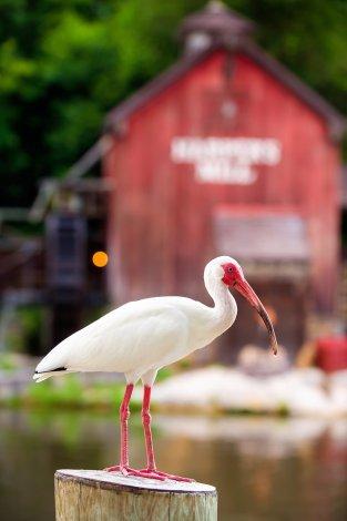 bird-frontierland-walt-disney-world