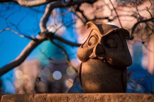 owl-disneyland-sony-a7rii_1