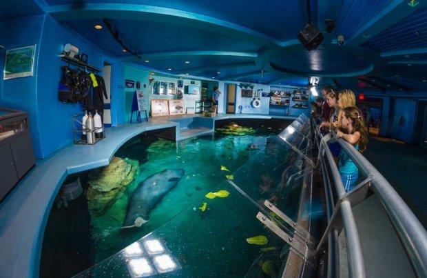 epcot-manatees-living-seas-fisheye-disney-world-bricker-024