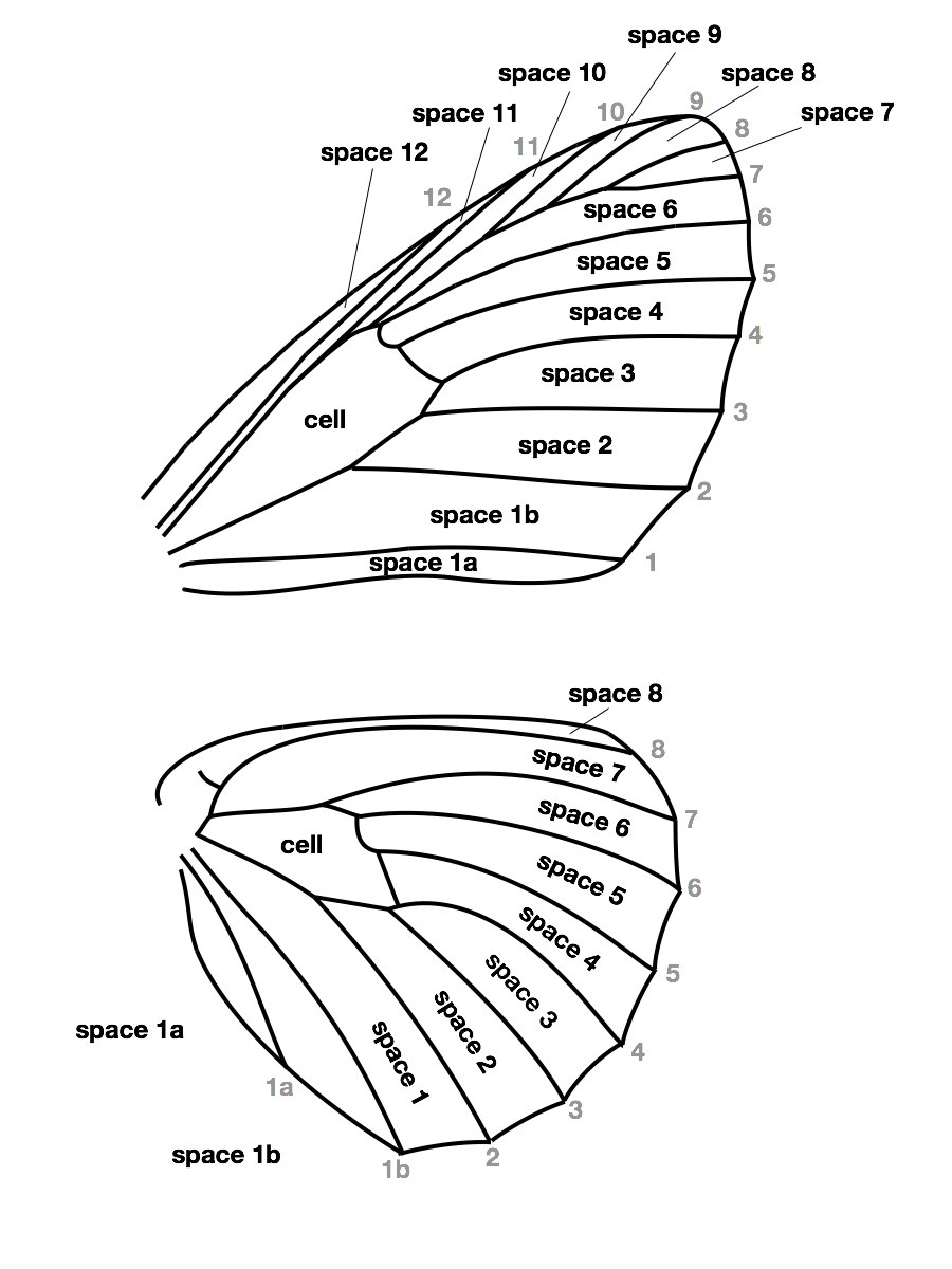 diagram of a butterfly