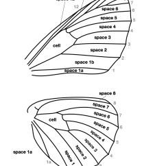 Butterfly Anatomy Diagram Basic Sentence Diagramming Worksheet Dispar Highslide Js