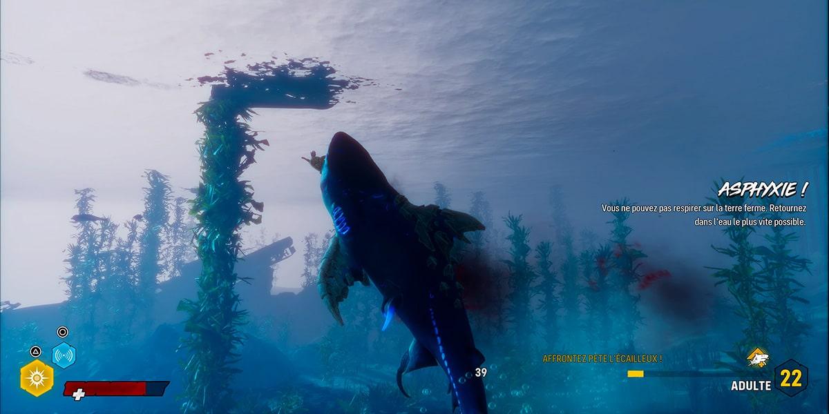 Maneater Requin mange tortue