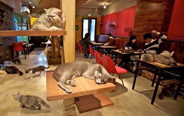 A Parigi apre il bar dei gatti nel quartiere Marais  Dissapore