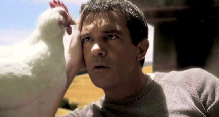 La gallina del Mulino Bianco e di Banderas  un pupazzo  Dissapore