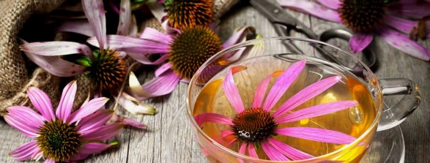 banniere_article_plantes-défenses-immunitaires