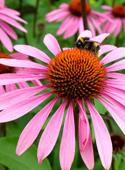 photo_article_plantes-défenses-immunitaires_1