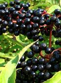 photo_article_plantes-défenses-immunitaires_9