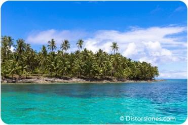 Palmeras en la isla de Daco