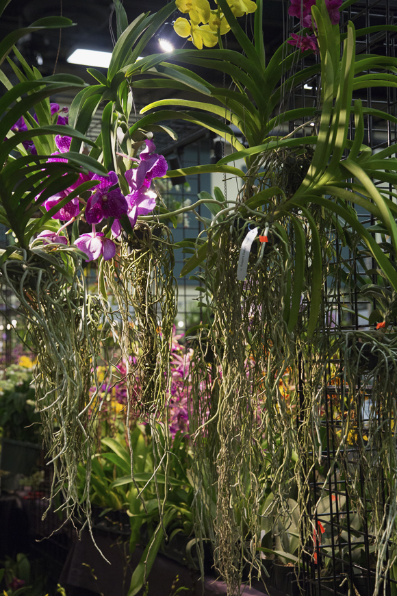 orchidshow-95_online