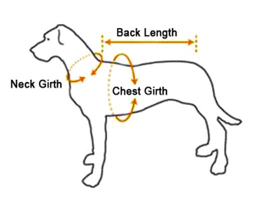 pet harness big w