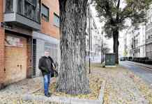 Raúl Martínez, redactor del programa Árboles vecinos