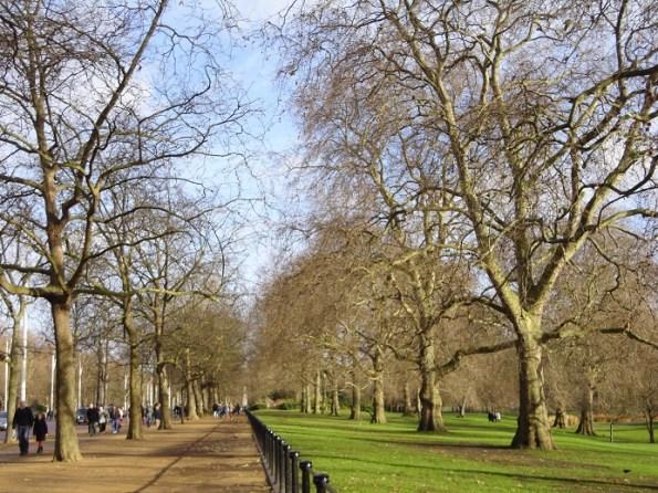 Het koninklijke James Park bij Buckingham Palace