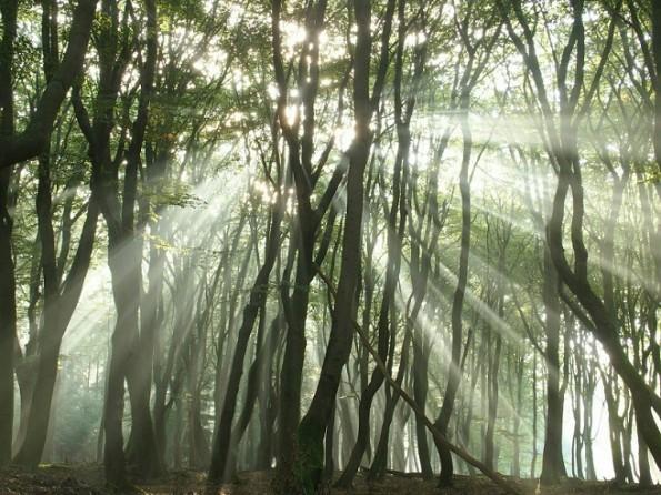 Dansende bomen speulderbos