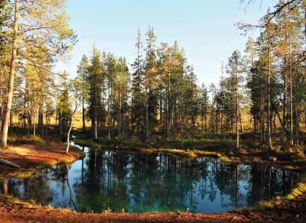 Grödkallan Zweeds Lapland