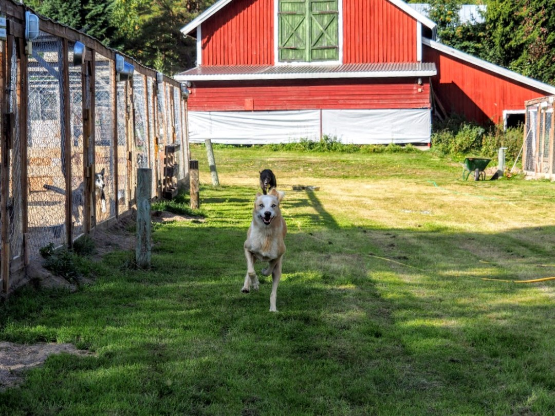 Husky Farm
