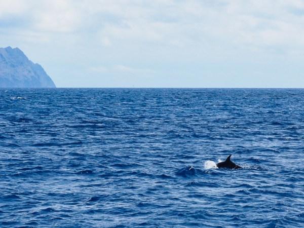 Dolfijnen Ilhas Desertas Madeira