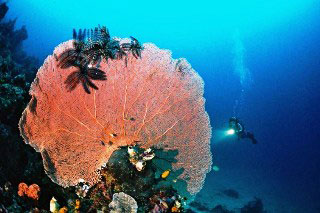 Flores Diving Indonesia