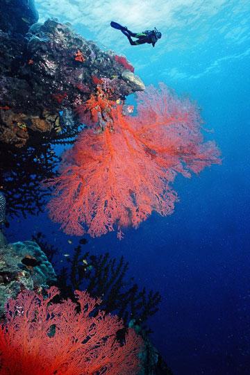 Reef Great Diving Scuba Barrier