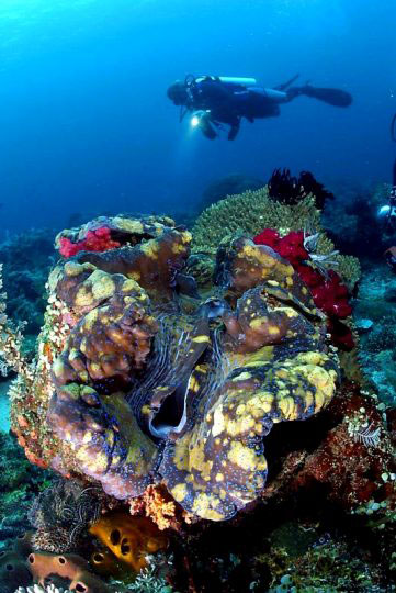 Indonesia Scuba Diving Trips Frequently Asked Questions