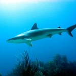 15-shark-bm-website