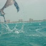 foto's aruba 124