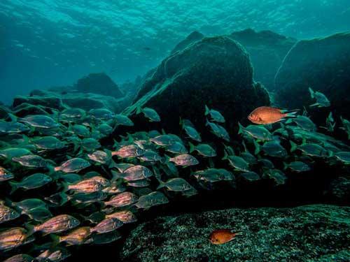 Schnuppertauchen teil 2, DSD, Dive College Lanzarote, Playa Blanca