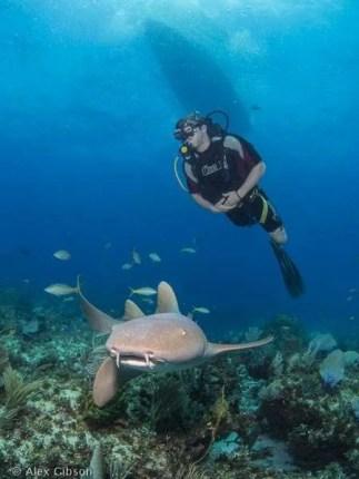 Nurse shark at Cayo Largo, Cuba