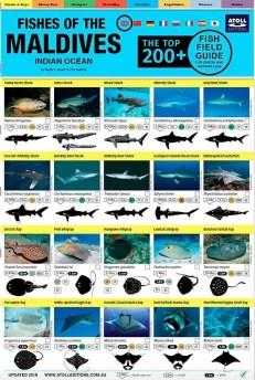 Maldives Fish Guide
