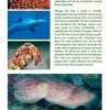 Marine Life of the Maldives - back cover