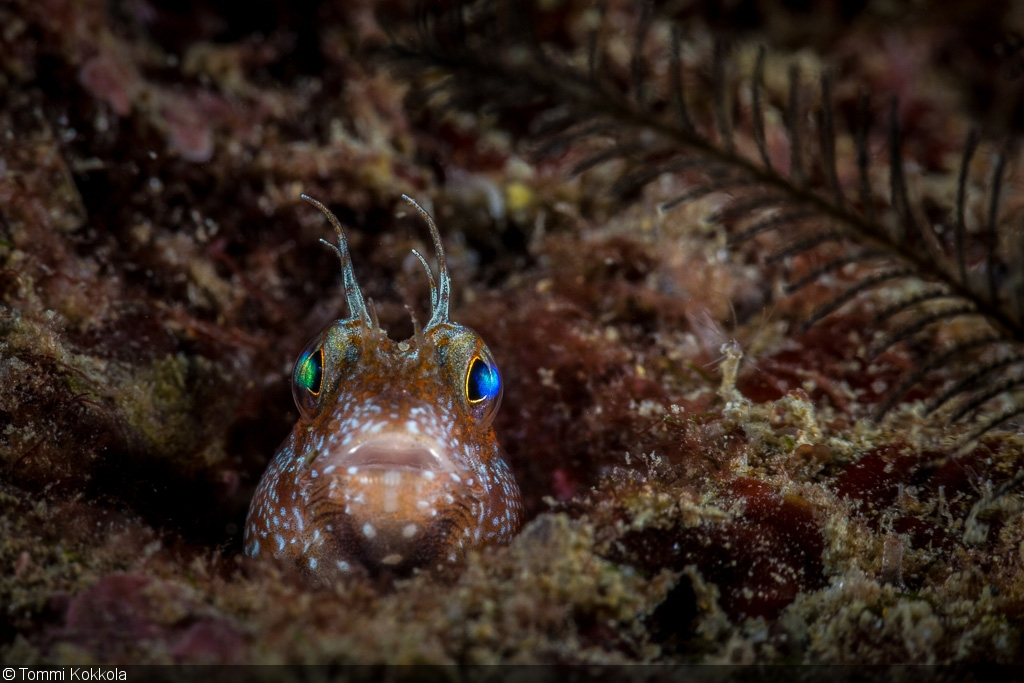An Underwater Photographer S Guide To Taiwan