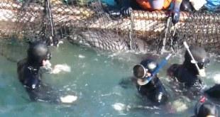 צייד דולפינים במפרץ טאיג'י ביפן