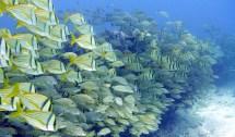 Diving Guide Puerto Morelos