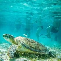 Belize Barrier Reef Snorkeling Wonders