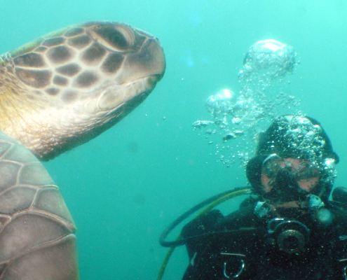 Diver Tenerife Turles