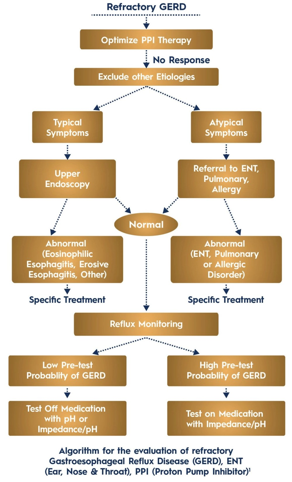 medium resolution of acg guideline algorithm