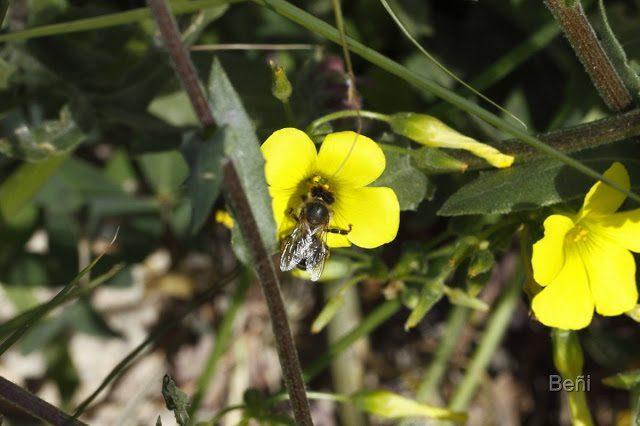 insecto diptero y flor