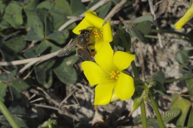 insectos y flores