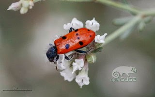 https://www.diversidadyunpocodetodo.com/fondos-pantall-wallpapers-opensuse-naturaleza-insectos-flores-1-2-3/