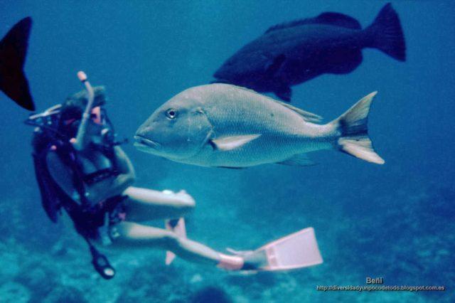 """0550fd48b705 La isla Cozumel (II)  Buceando en los arrecifes de coral cámara en mano y  otras """"Cositas Buenas""""."""
