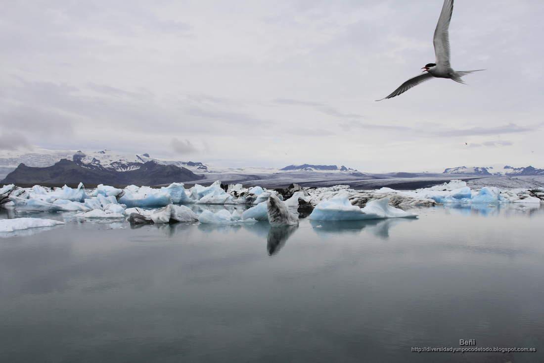 el lago de origen glaciar Jokulsarlon es islandia
