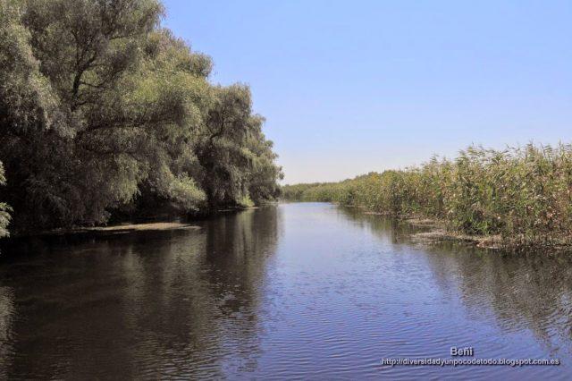 bosque de ribera y carrizales en un canal del delta del danubio