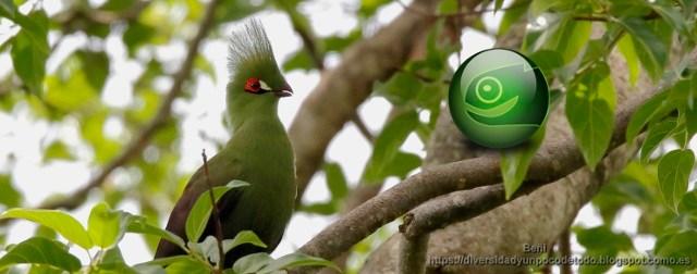 Repositorio Graphics de la comunidad de openSUSE