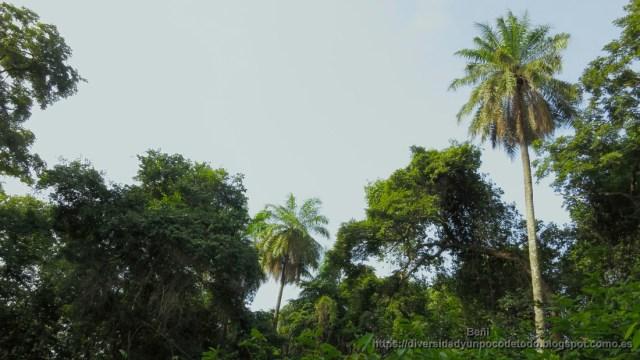 Vegetacion de la reserva natural Abuko