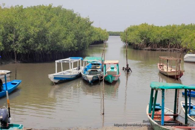 manglares en el estuario del rio gambia