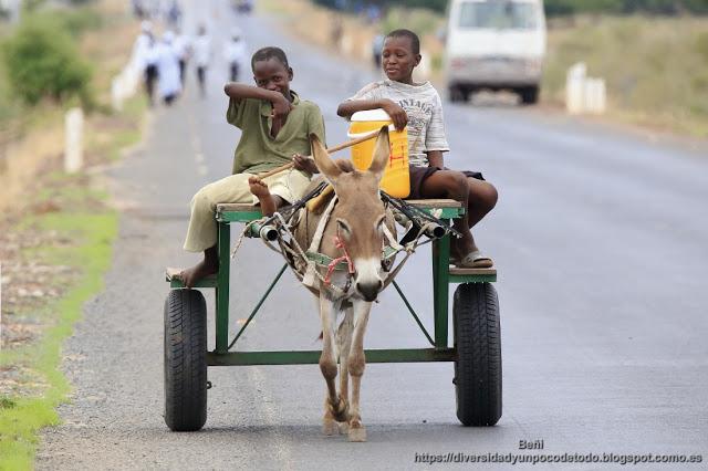 chicos gambianos en un carro tirado por un burro