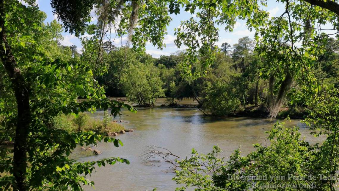 el rio congaree junto al Three Rivers greenway