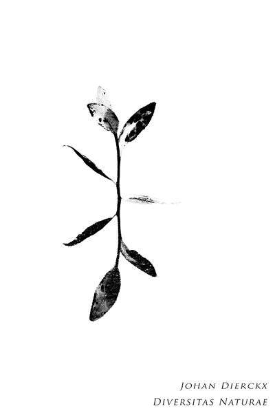 Reflectie in zwart-wit
